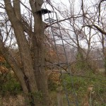 Tree stands have been used for 100's of years to hunt from.