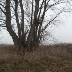 A tree stand may give you an advantage when hunting. But is the tree safe?